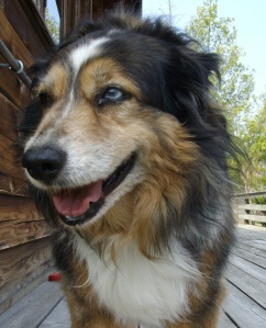 Old Dog Max
